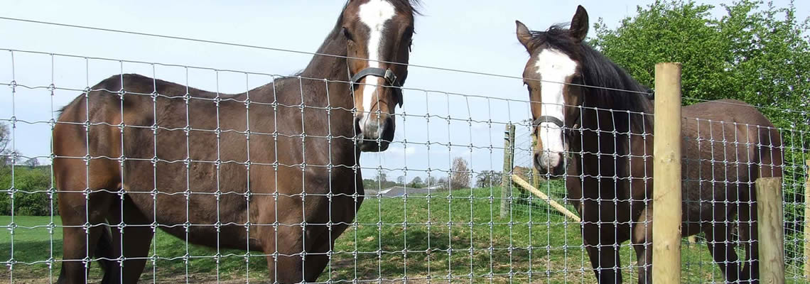 2 horses are fielded in fence installed with wood post in pasture