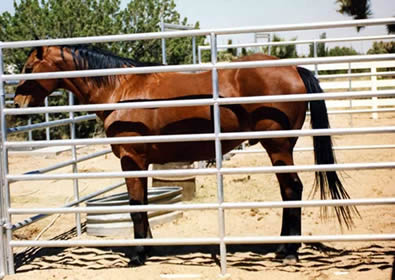 7 rails round pipe fence panel makes a box for horse