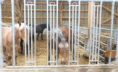 Four horses encircled safe horse fence with fence panel indoor