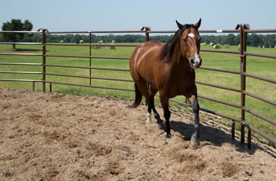Red powder coated panel makes pen for horse at ranch