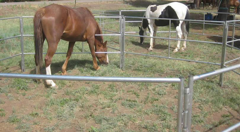 Two horses eating in double corrals outdoor