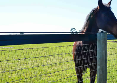V Mesh Horse Fence With Narrow Spacing