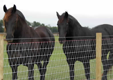 V-mesh horse fence installed with wood post for horses.